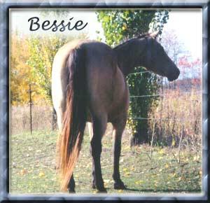 Bessie is a double-bred Buckskin granddaugher of Poco Bueno.