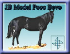 Click here for JB Model Poco Bevo (Poco Bueno and Doc Tari grandson), Foundation Quarter Horses at their best!